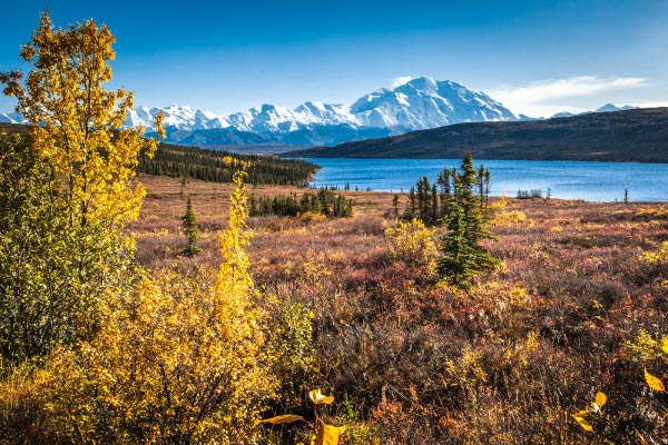 Denali National Park in the fall with Denali in the background