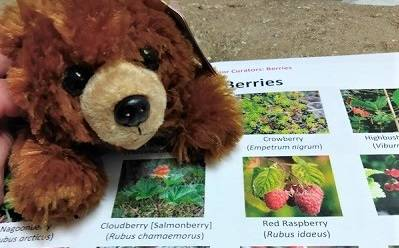 A stuffed bear toy next to a sheet of paper with pictures of berries.