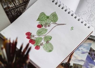 Drawing of a berry plant in a sketchbook, colored with red and green colored pencils.