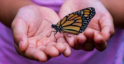 An orange and black butterfly sits on a child's cupped hands.