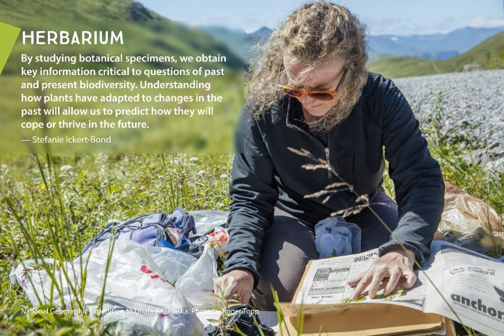 The museum's more than 2.2 million artifacts and specimens are collected by 10 research disciplines. Visit Expedition Alaska in the museum's Collections Gallery to learn about this foundation of museum research, exhibitions, and programs.