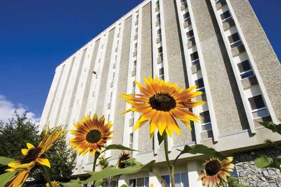 exterior of Moore hall with sunflowers in the foreground