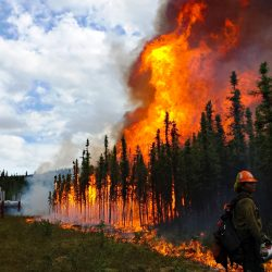 Firefighters conduct a burnout operation along the trans-Alaska oil pipeline at the Aggie Creek Fire northwest of Fairbanks in 2015