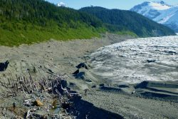 The retreat of La Perouse Glacier in Southeast Alaska exposed this ghost forest.